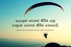 SH New quotes